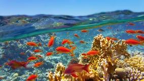 Korallenriff angesehen von der Oberfläche stockbilder