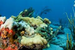 Korallenriff-Aufbau. Stockfotografie