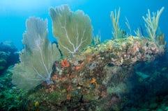 Korallenriff-Aufbau. Lizenzfreies Stockfoto