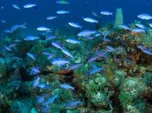 Korallenriff-Aufbau. Stockfoto