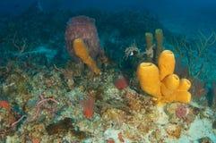 Korallenriff-Aufbau. Lizenzfreie Stockfotografie