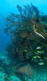Korallenriff-Aufbau mit Fischen Stockfoto