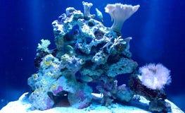 Korallenriff des Ozeans im Blaulicht Stockfotografie