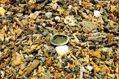 Korallenriff des Strandes in Japan lizenzfreie stockfotografie