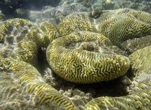 Korallenriff im Roten Meer Stockfotos