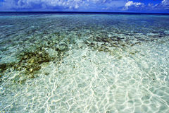 Korallenriff Malediven Stockfoto