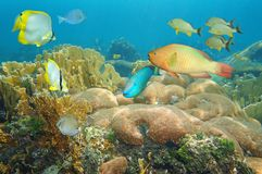 Korallenriff mit bunten Fischen unter dem Meer Lizenzfreie Stockfotografie