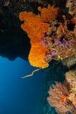 Korallenriff mit Detail von weichen Korallen Stockfotos