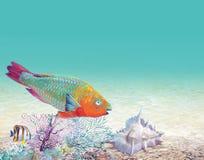 Korallenriff mit einem Fischpapageien stockfotos