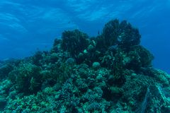 Korallenriff mit Feuerkoralle und exotische Fische an der Unterseite vom bunten tropischen Meer Unterwasser Lizenzfreies Stockbild