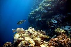 Korallenriff mit Fischen Stockbilder