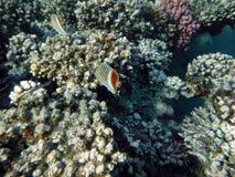 Korallenriff mit Fischen Stockfotos