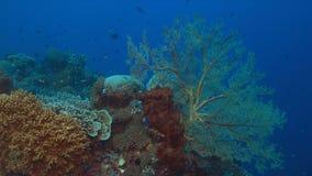 Korallenriff mit großem Seefächer Lizenzfreie Stockfotos