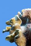 Korallenriff mit großer weicher Koralle an der Unterseite von tropischem Meer lokalisiert auf Hintergrund des blauen Wassers Stockfotos
