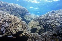 Korallenriff mit harter Koralle unter Wasseroberfläche von tropischem Meer Stockbild