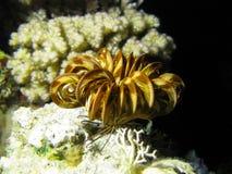 Korallenriff mit Seelilien Lizenzfreie Stockfotos