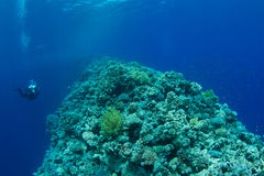 Korallenriff mit technischem Taucher Stockfotografie