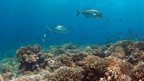 Korallenriff mit vielfischen Lizenzfreie Stockbilder