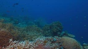 Korallenriff mit vielfischen Stockfotos
