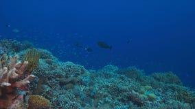 Korallenriff mit vielfischen Lizenzfreie Stockfotografie