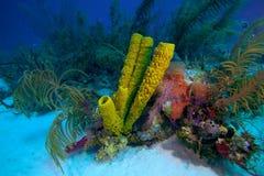 Korallenriff nahe Cayo largo, Kuba Lizenzfreie Stockbilder
