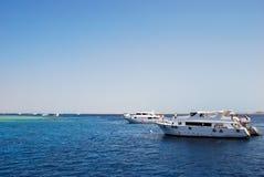 Korallenriff nahe Tiran, Ägypten stockfotografie