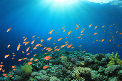 Korallenriff-Szene Lizenzfreie Stockbilder