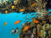Korallenriff-Szene Stockfotos