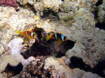 Korallenriff und Fische Stockbilder