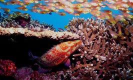 Korallenriff und Fische Lizenzfreies Stockfoto