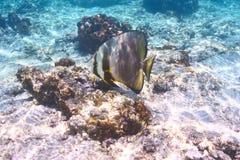 Korallenriff und Fische Lizenzfreie Stockfotos