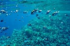 Korallenriff und Fische in dem Roten Meer Lizenzfreie Stockfotos