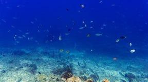 Korallenriff und Fische im tropischen Meer Unterwasser Stockfotografie