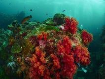 Korallenriff und Rifffische Stockbild