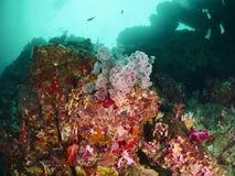 Korallenriff und Rifffische Lizenzfreies Stockbild