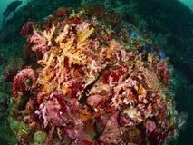 Korallenriff und Rifffische Stockfoto