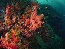 Korallenriff und Rifffische Stockfotos