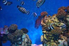 Korallenriff und Seefische stockfotos