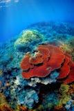 Korallenriff und tropische Fische Lizenzfreie Stockfotos
