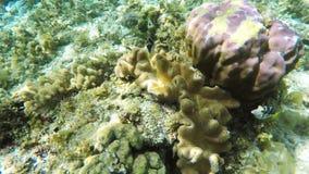 Korallenriff und tropische Fische stock footage