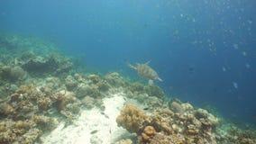 Korallenriff und tropische Fische philippinen stock video