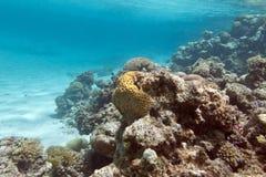 Korallenriff unter der Oberfläche des Wassers im tropischen Meer, underwa Stockbild