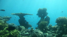 Korallenriff von Rotem Meer stock footage