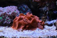 Korallenriffaquariumbehälter Stockfotos