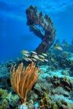 Korallenriffszene Stockbilder