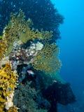 Korallenriffszene mit Fischen Stockbilder