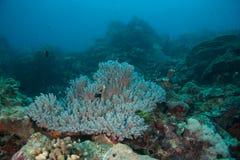 Korallenrote Anordnung Stockfotos