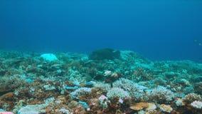 Korallenrote Bleiche stock video
