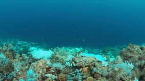 Korallenrote Bleiche stock video footage