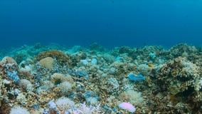 Korallenrote Bleiche Lizenzfreies Stockbild
